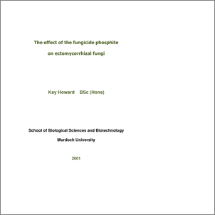 Phd thesis erp